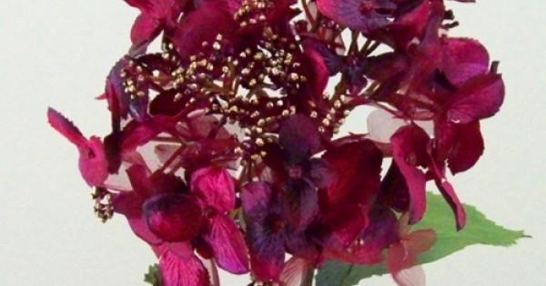 Christmas Flowers Seasonal Artificial Flowers Artificial Flowers In Festive Colours