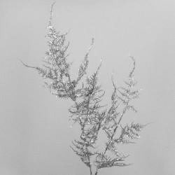 Artificial Asparagus Fern Iridescent Silver - 17X122