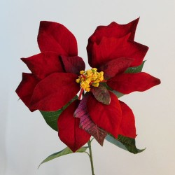 Classic Christmas Poinsettias Red Velvet - X19004 BAY3