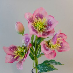 Frosted Hellebores Stem Dusy Pink - 17X009