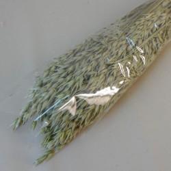 Dried Avena Oats Natural - DRI023 HH3
