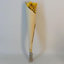 Dried Craspedia Yellow - DRI020