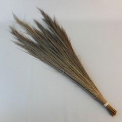 Dried Broom Grass - DRI003 HH2