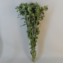 Dried Carthamus Natural Green - DRI029 HH3