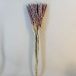 Dried Cortaderia Natural 75cm - DRI028 HH3