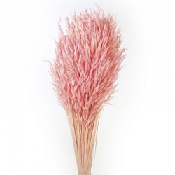 Dried Avena Oats Pink - DRI030 HH4