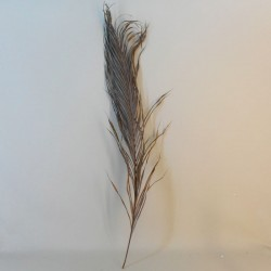 Dried Kentia Palm Leaves - DRI004