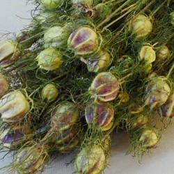Dried Nigella - DRI010 HH2