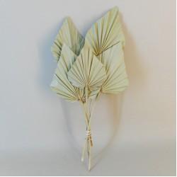 Dried Palm Spears 5 Pack - DRI006
