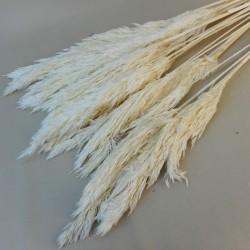 Dried Pampas Grass Bleached - DRI012 HH2
