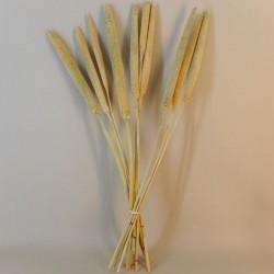 Dried Pearl Millet - DRI001 HH2