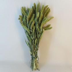Dried Setaria Grass - DRI008