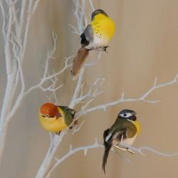 9cm Clip on Garden Birds Pack of 3 - BIR025