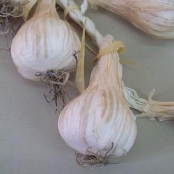 Artificial Garlic String - GAR001 GG3