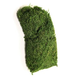 Dried Asia Moss Green 50g - MOS015 BX8