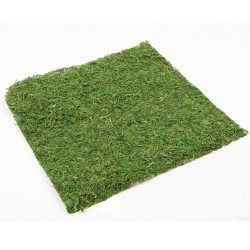 Moss Sheet Square Green 37cm - MOS012 U4
