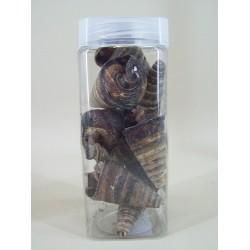 Cone Shells Dark - SHE001 4C