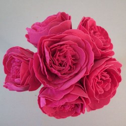Colourfast Foam Peony Roses Hot Pink 6 pack - R207 EE3