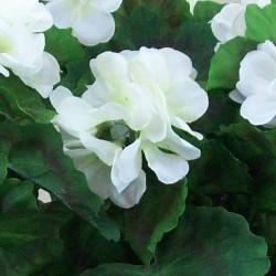 Artificial Garden Window Boxes Cream Geraniums - PLA003