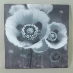 Poppy Canvas Wall Art  - WALL002