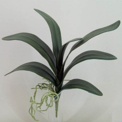 Orchid Leaves and Roots XXL - O044 I2