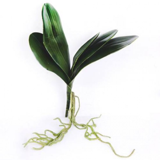 Orchid Leaves and Roots Medium - O002 J2