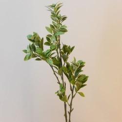 Aglaia Leaf Spray - AGL001 A2