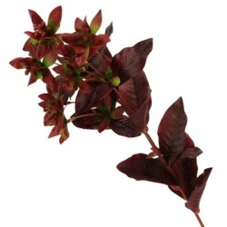 Artificial Euphorbia Stem Red Green - EUP004 FF2