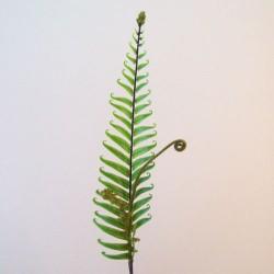 Artificial Fiddle Head Fern Leaves - FER011 E3