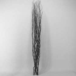 Contorted Willow Bundle Black - WIL004