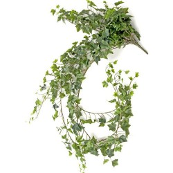 Extra Long Artificial Trailing Ivy Plant English Green 182cm - IVY025 H1
