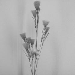 Grey Tassel Flowers - T068 R3