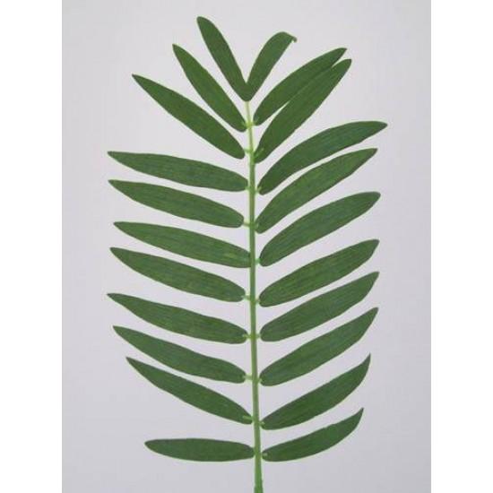 Small Cycas Leaf (Areca or Pogonatherum Palm) - PM003