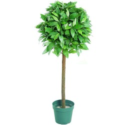 4' Topiary Bay Tree - BAY002
