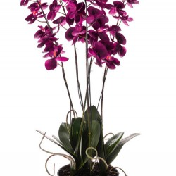 Artificial Phalaenopsis Orchid Plant in Black Bowl Magenta Pink - ORP044 4C