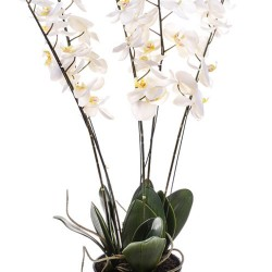 Artificial Phalaenopsis Orchid Plant in Black Bowl Cream - ORP045