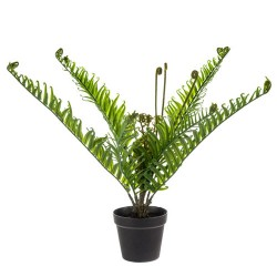 Artificial Plants Potted Fiddlehead Fern 53cm - FER018