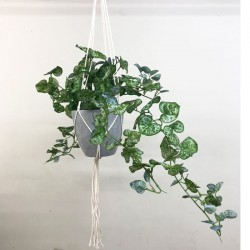 Potted Artificial String of Hearts Plant in Macrame Hanger - STR003 FR