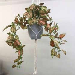 Potted Artificial Trailing Fittonia Plant in Macrame Hanger - FIT003 FR
