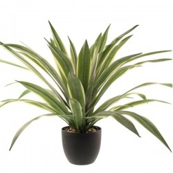 Artificial Plants Potted Luxury Dracaena 65cm - DRA005