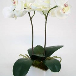 Mini Artificial Phalaenopsis Orchid Plant in White Pot Ivory - ORP009 7C
