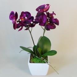 Mini Phalaenopsis Orchid Plant Magenta Pink Plant - ORC030 7D