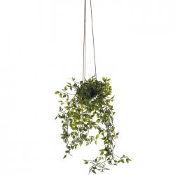Potted Artificial Ruscus Plants Trailing 80cm - RUS011 5E