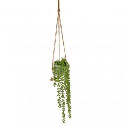 Potted Senecio String of Pearls Plant Hanging - SEN002 1D