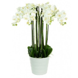 Real Touch Artificial Phalaenopsis Orchid Plant in White Pot 19 stems - ORC020