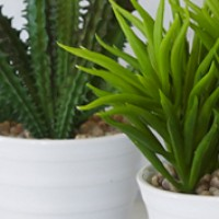 Potted Plants - Foliage