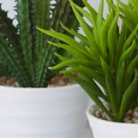 Potted Plants - Foliage