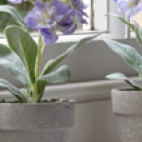 Potted Plants - Flowering