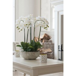 White Phalaenopsis Orchid Plant in Clay Pot Medium - ORC007 3E