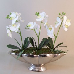 Knightsbridge Artificial Phaleanopsis Orchid Plants White with a hint of Pink in Silver Shell Planter - ORC027